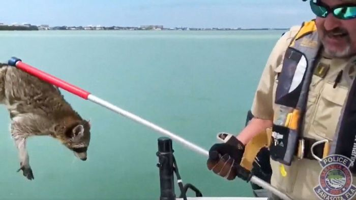 Aus dem Meer gerettet: Waschbär sitzt auf Boje fest