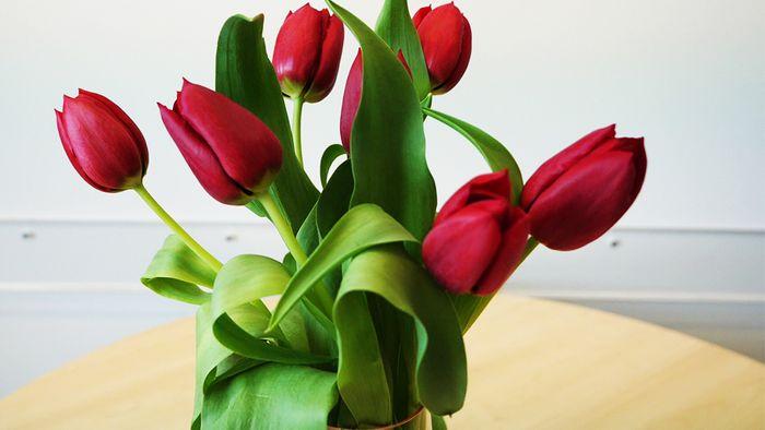 Mit ein paar Tricks halten Deine Schnittblumen länger.