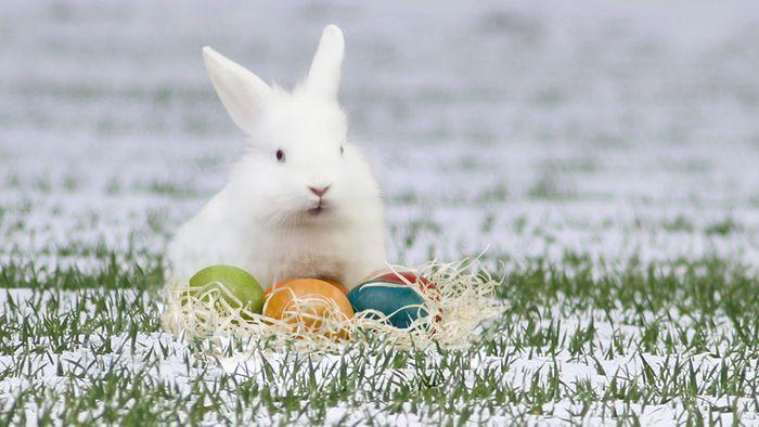 16-Tage-Trend: Ostereiersuche im Schnee?