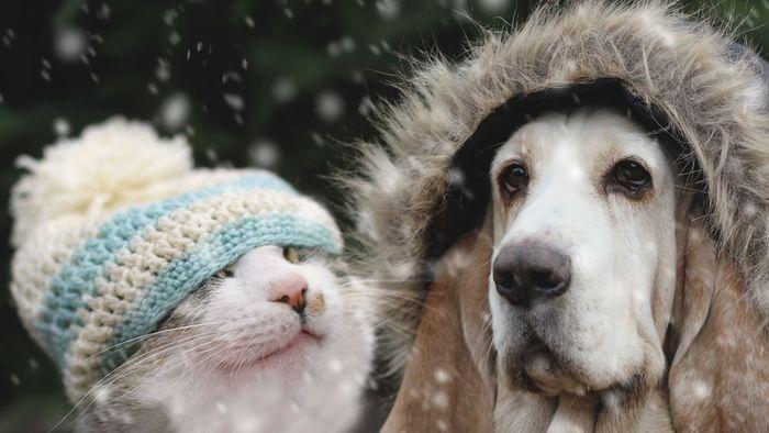Kai Zorn: Nachtfrostgefahr und Schnee! Der April will's nochmal wissen
