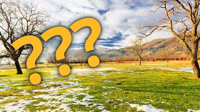 Im Frühling stellen sich viele die Frage: Wann startet eigentlich die Wespenzeit?