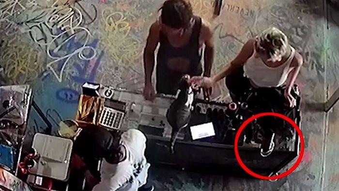 Beim Katze streicheln: Dreiste Touristin klaut Handy