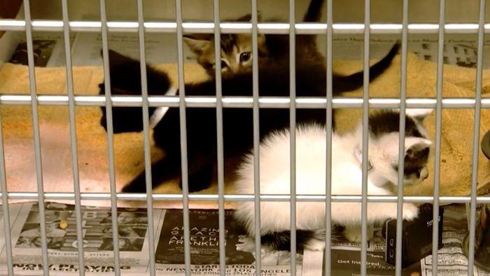 Grausame Tat: Mann wirft Katzenbabys in den Müll