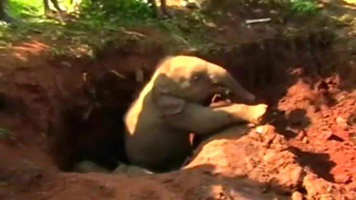 Elefantenkinder mit Bagger gerettet