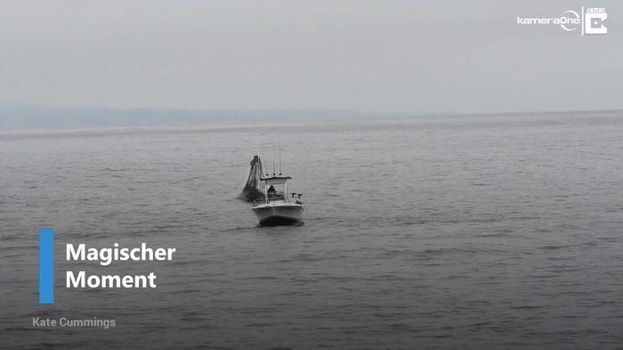 Spektakulär: Buckelwal springt neben Boot aus dem Meer