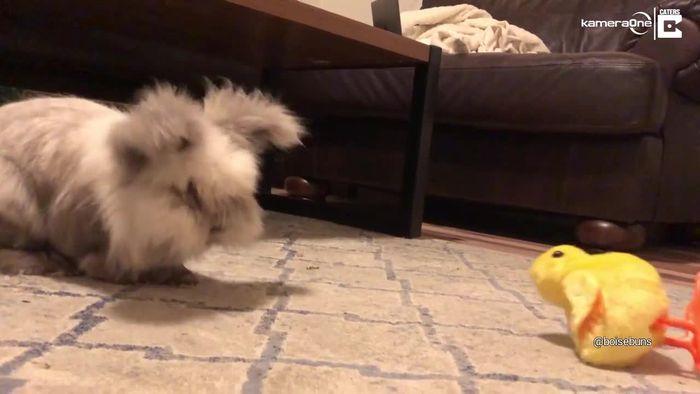 Ziemlich schlechte Freunde: Grumpy Bunny tritt Spielzeugküken