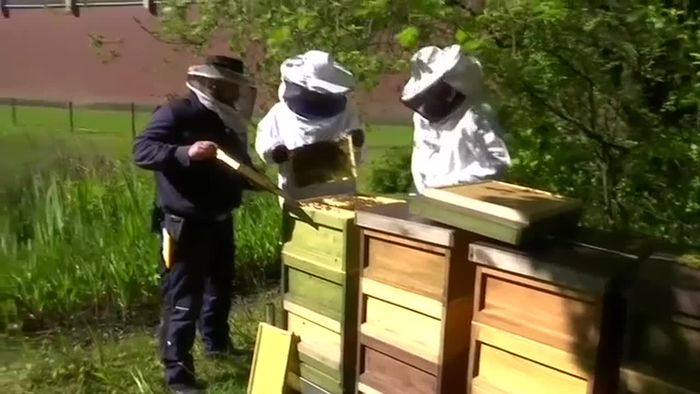 Vorbildlich: Knast-Bienen sollen Schule machen
