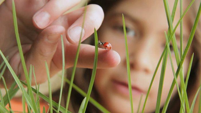 Wer einen insektenfreundlichen Garten möchte, muss ein paar Tipps beachten.