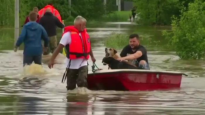 Hochwasseralarm in Polen - Tierheim überschwemmt