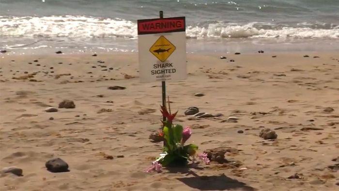Bein abgerissen: Mann stirbt nach Hai-Attacke auf Hawaii