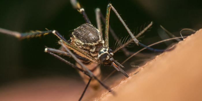 Mückenplage 2019? Was wirklich gegen Mücken hilft   wetter.com