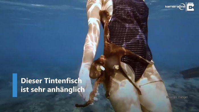 Anhänglicher Tintenfisch umklammert Schnorchlerin