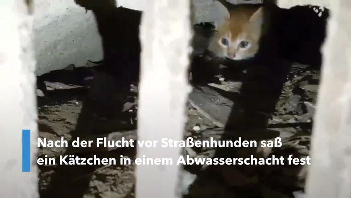 Nach Flucht vor Hunden: Kätzchen aus Abwasserschacht befreit