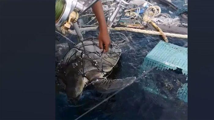 In Fischernetz gefangen: Zwei Schildkröten aus Müll befreit