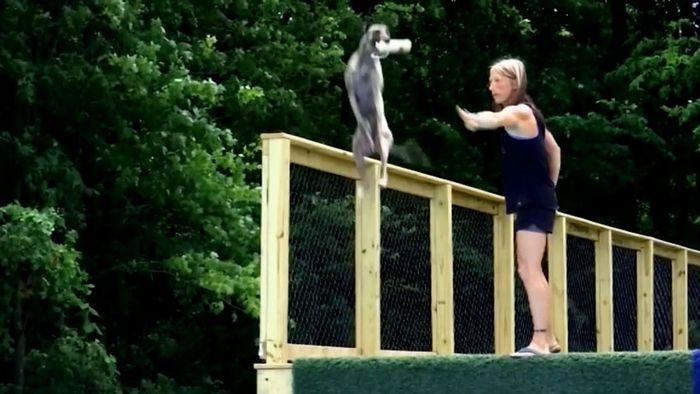 Weltrekord! Hund springt fast elf Meter weit
