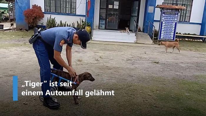 Gelähmte Hündin: Polizist hat fantastische Idee