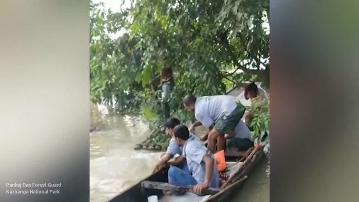 Überschwemmungen in Indien: Mini-Nashorn aus Fluten gerettet