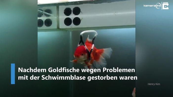 """""""Rollstuhl"""" für Goldfisch"""