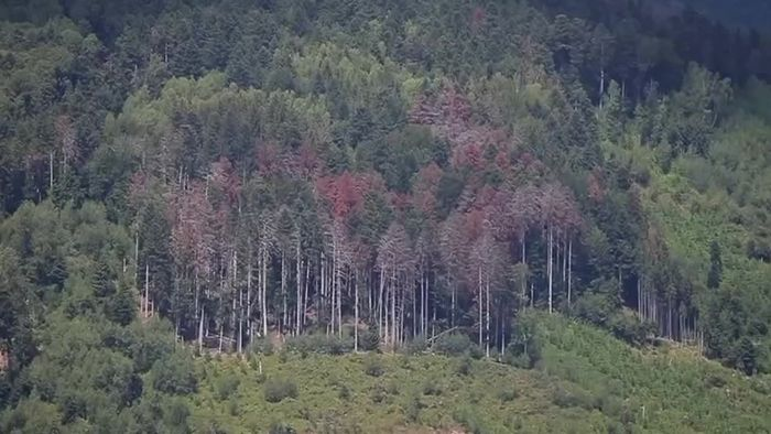 Wald leidet unter Hitze und Trockenheit