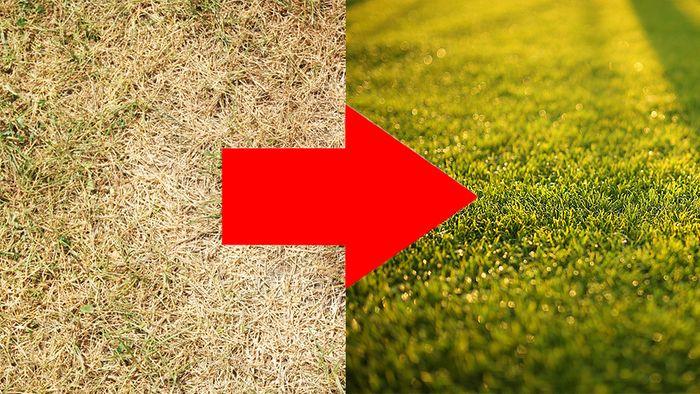 So wird trockener Rasen zu dichtem und strapazierfähigem Rasen