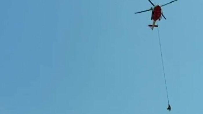 Spektakuläre Rettungsaktion: Kuh mit Hubschrauber geborgen
