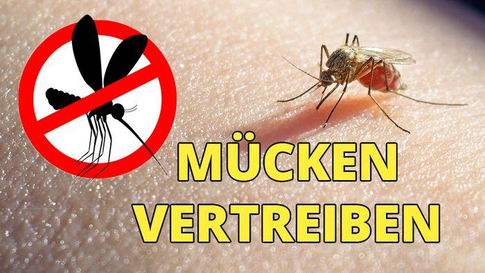 So vertreibst Du Mücken