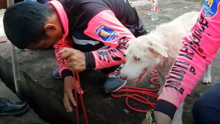 Welpen aus Erdspalte gerettet: Hundemama vertraut menschlichen Helfern