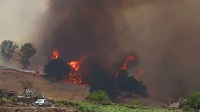 Außer Kontrolle: Verheerende Waldbrände auf Gran Canaria