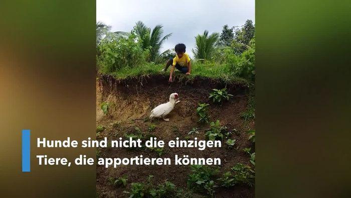 Ente bringt Bub verlorenen Schuh zurück