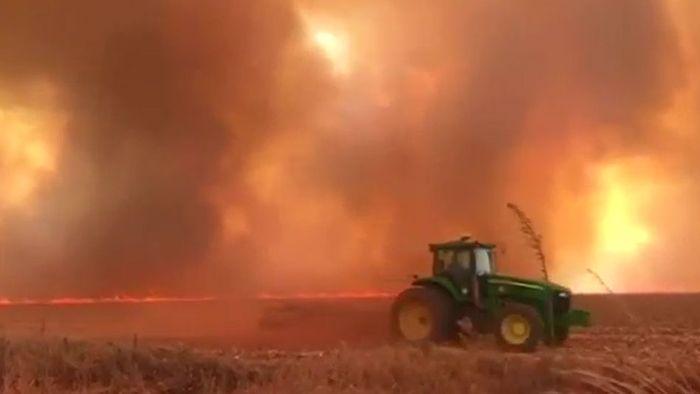 Umweltnotstand: Der Regenwald brennt