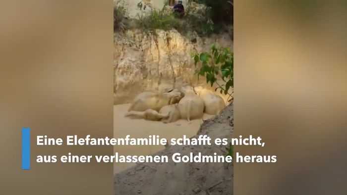 Elefantenfamilie aus verlassener Goldmine gerettet