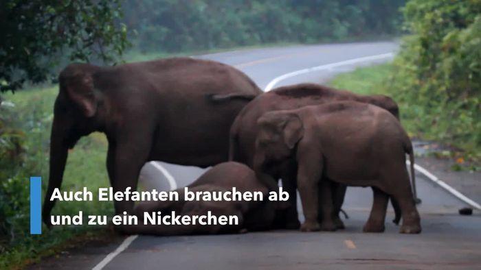 Schläfriger Elefant weigert sich aufzuwachen