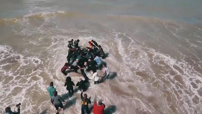 Schwertwale an argentinischen Strand gespült
