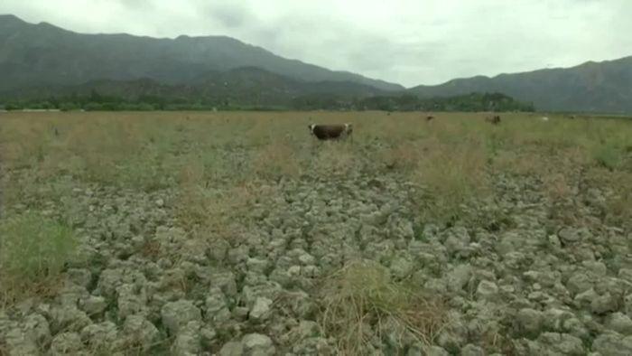 Schlimmste Dürre seit Langem: Chile leidet unter extremer Trockenheit