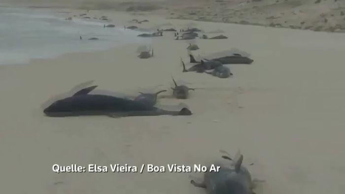 Massensterben von Delfinen auf Kapverden