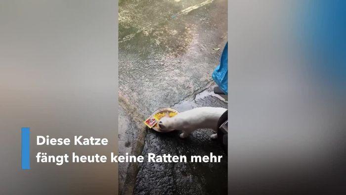 Ungleiche Freunde: Katze teilt Essen mit Ratte