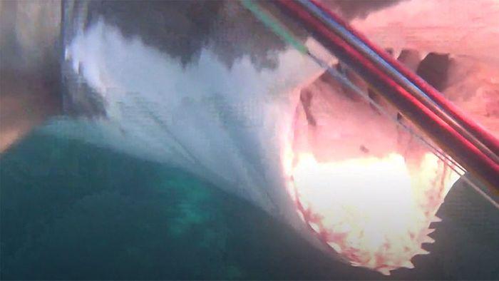 Nervenaufreibend: Hai macht Jagd auf Taucher