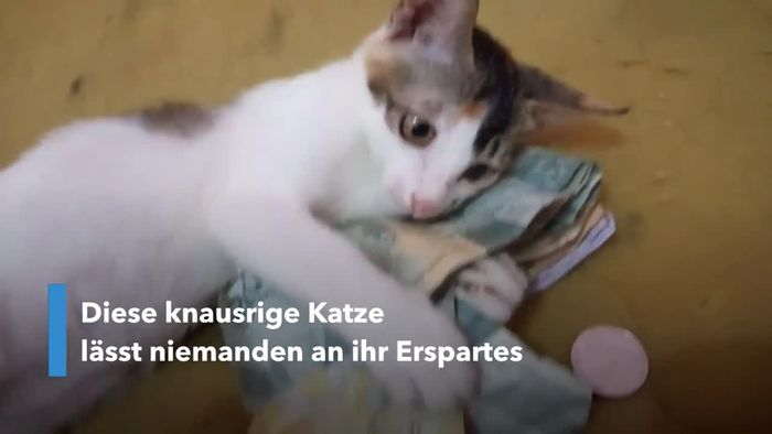 Rigorose Katze verteidigt ihr Geld