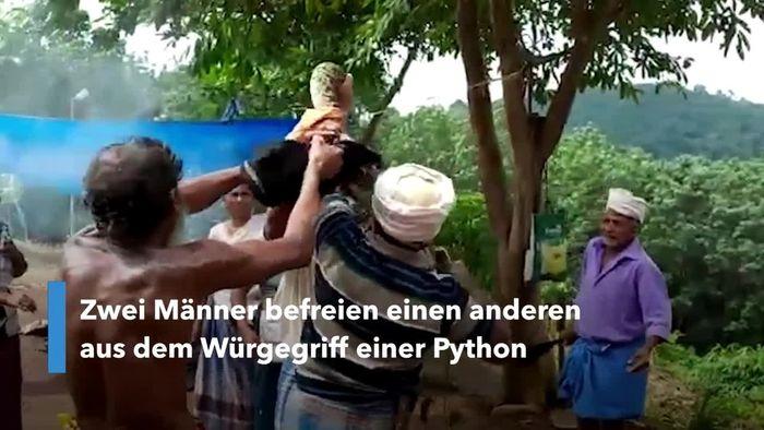 Mann fast von Python erwürgt