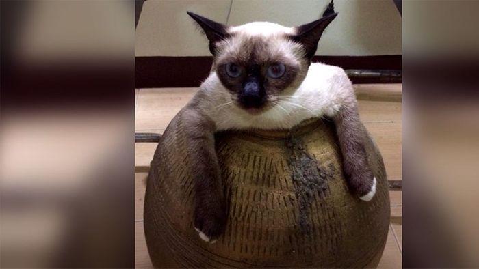 Nichts geht mehr: Dicke Katze muss aus Vase gerettet werden