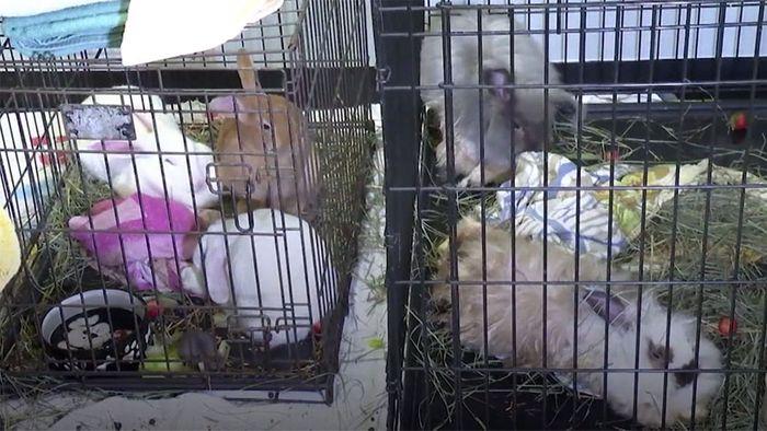 Messie-Haushalt mit 245 Tieren und 3 Kindern entdeckt