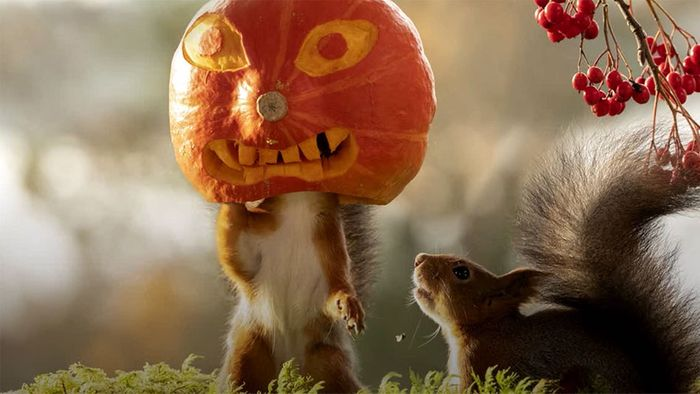 Schrecklich süß: Eichhörnchen in Halloween-Laune