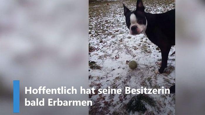 Lieblingsball festgefroren: Hund steht vor Rätsel