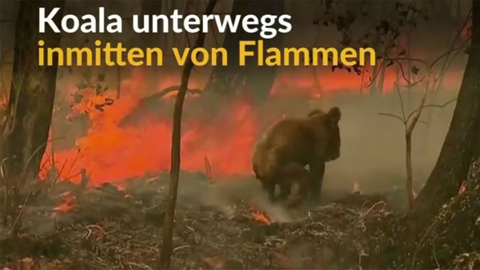 Eine Heldin! Frau rettet Koala aus Flammen