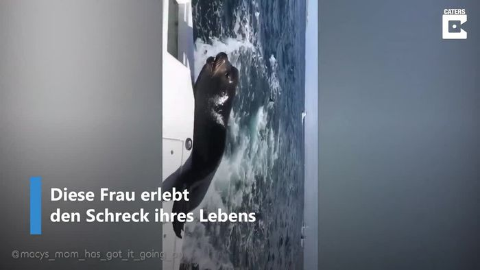 Gefräßiger Seelöwe erschreckt Frau auf Boot