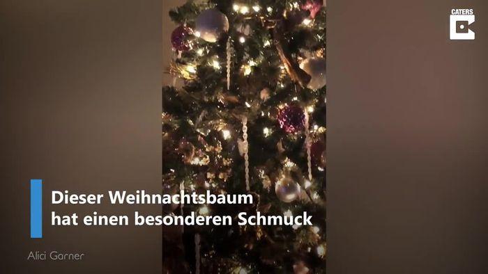 Weihnachtliche Überraschung: Katze versteckt sich in Christbaum