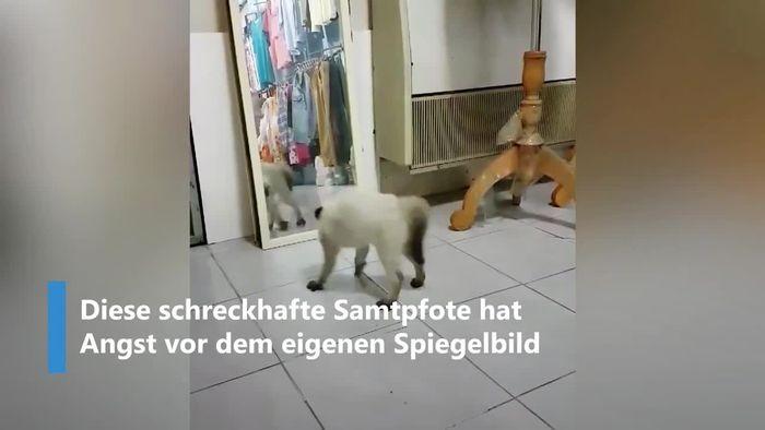 Panik vor dem Spiegel: Katze erschrickt vor eigenem Abbild