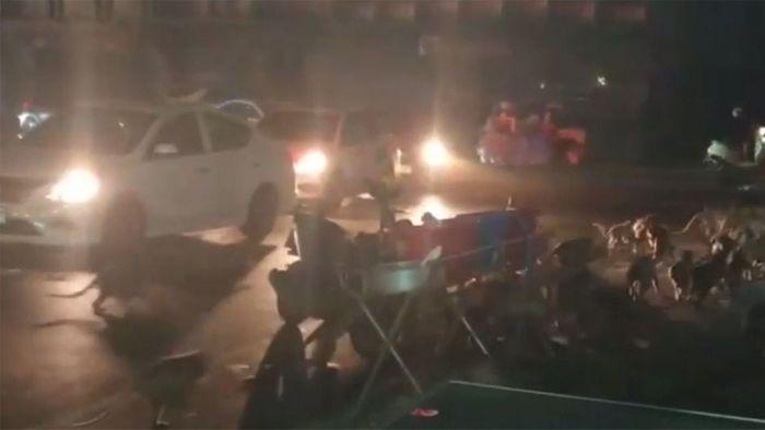 Riesige Affen-Horde flüchtet vor Feuerwerk