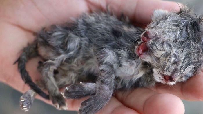 Kätzchen mit zwei Köpfen: Harter Kampf ums Überleben