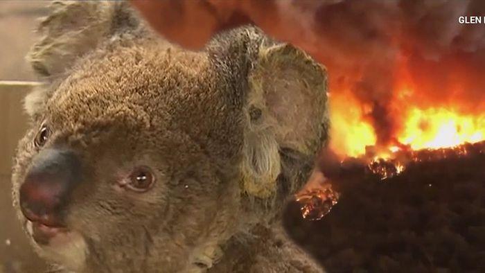 In Australien lodern seit Oktober schwere Buschfeuer.